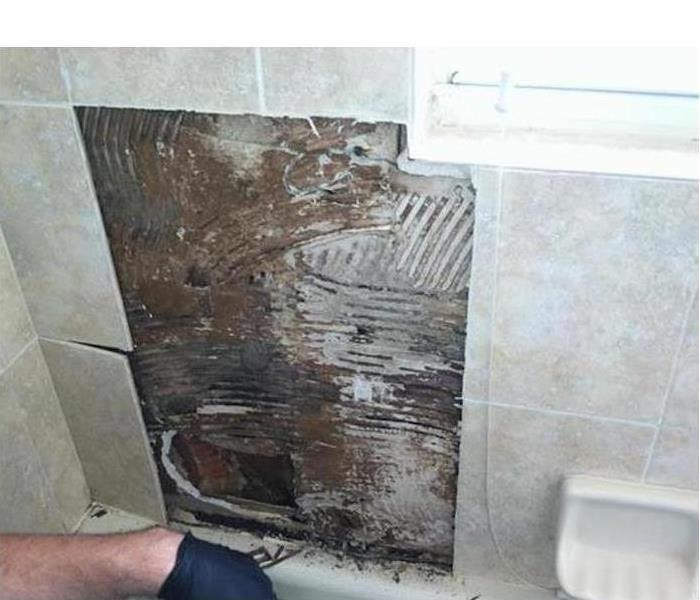 Black mold found behind bathroom tiles