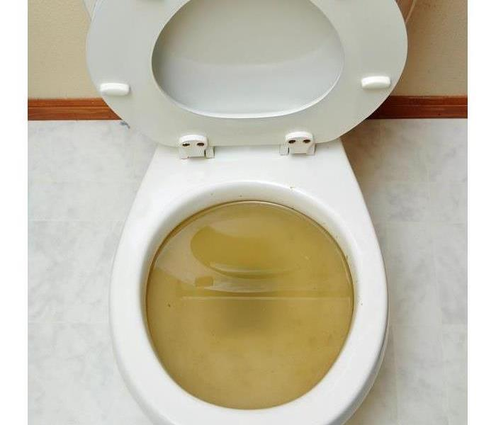 Sewage water on a toilet