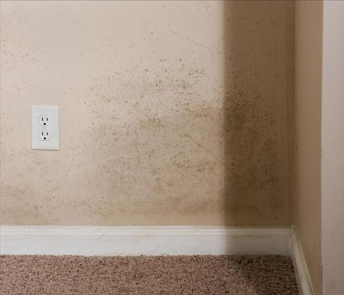 Mold Remediation How SERVPRO Helps Restore Air Quality After Mold Damage To Your Etowah Home