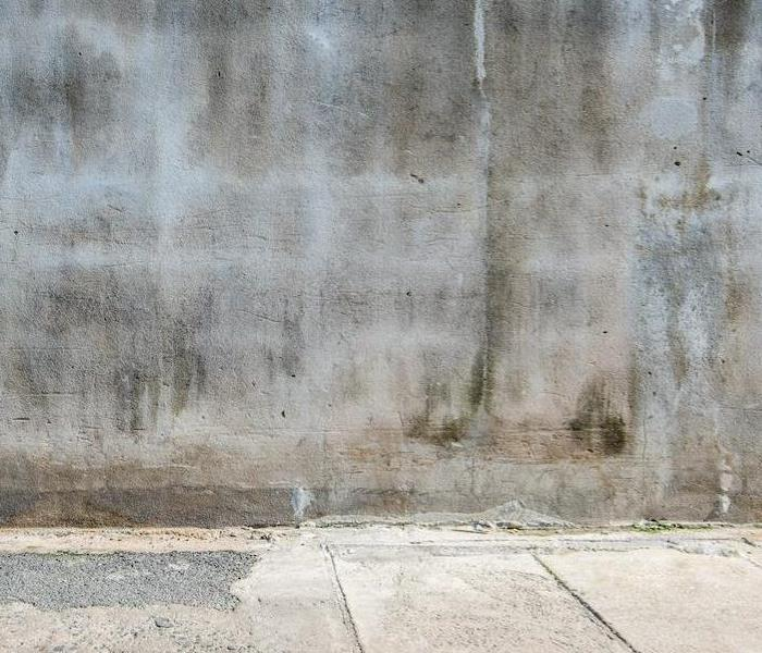 Mold Remediation Understanding the Lifecycle of Mold Damage in Lexington Properties